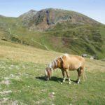 Kinder Outdoor wandern in Südtirol: Zum südlichsten Fjord