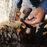 Der große Test: Unser Wasserrad aus Kastanie funktioniert!  foto (c) kinderoutdoor.de