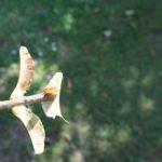 Mit dem Taschenmesser basteln: Einen Flieger