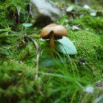 Pilze sammeln mit Kindern: Leckeres aus dem Wald