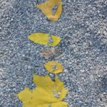 Schnitzeljagd für Kinder im Herbst: Kaum zu lauben!