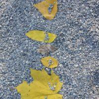 Schnitzeljagd für Kinder im Herbst: Welches Blatt gehört zu welchem Baum?  Foto (c) kinderoutdoor.de