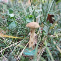 Fertig ist der geschnitzte Pilz.  foto (c) kinderoutdoor.de