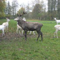 Dam- und Rotwild gehört zu den Wildparks.   foto (c) kinderoutdoor.de