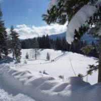 Mit Kindern Winterwandern in Tirol: Ein Traum in Weiß.   foto (c) kinderoutdoor.de