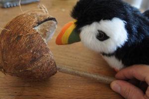 Gefüllte Kokosnuss Als Futterstelle Mit Kindern Selbst