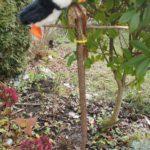 Futterstelle für Vögel in fünf Minuten basteln: Da staunt die Meise!