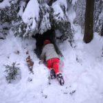 Schnee-Unterkunft bauen: Eine Schneehöhle unter einem Baum graben
