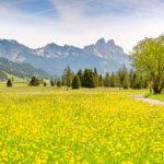 Wandern mit Kindern im Frühling: Im Tannheimertal blüht Euch was!