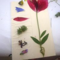 Kinder basteln mit gepressten Blumen (c) kinderoutdoor.de