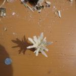 Schnitzen mit Kindern: Blumen!
