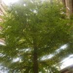 Kinder Waldwipfelwege: Die Bäume von ganz oben sehen