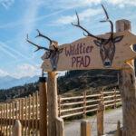 Kinder Themenwege in Tirol: Wildtierpfad