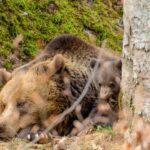 Kinder entdecken den Nationalpark Bayerischer Wald: Bären, Downhill und Bergwerke