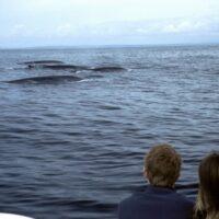 Kinder entdecken Irland. foto (c) tourism ireland