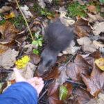 Kinder Ausflüge im Allgäu: Der Eichhörnchenwald bei Fischen