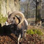 Kinder Outdoor Abenteuer wilde Tiere füttern