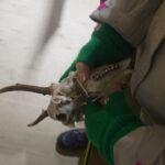 Kinder Schnitzeljagd: Den Wald mit den Sinnen erkunden