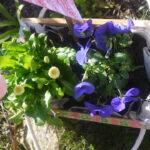 Kinder Outdoor basteln: Einen Minigarten